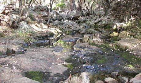 Waa Gorge walking track, Mount Kaputar National Park. Photo: Jessica Stokes