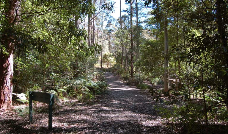 Carrowbrook track, Mount Royal National Park. Photo: Susan Davis.