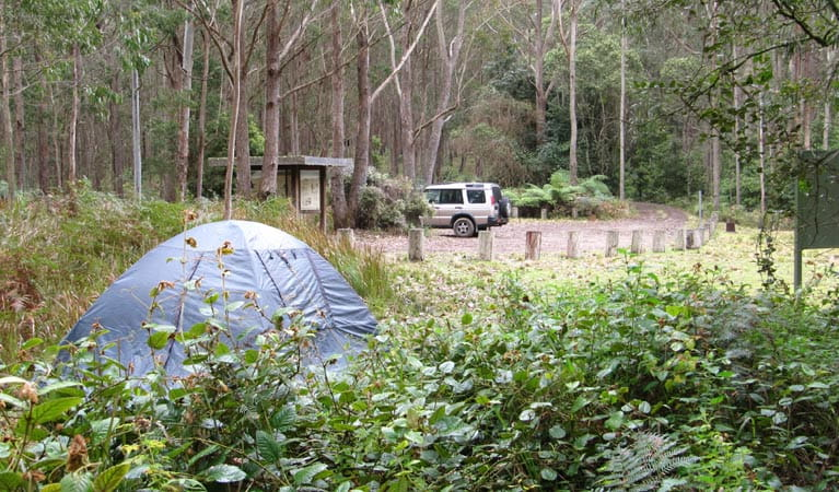Youngville campground, Mount Royal National Park. Photo: Susan Davis/OEH
