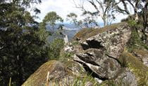 Pieries Peak walking track, Mount Royal National Park. Photo: Susan Davis.