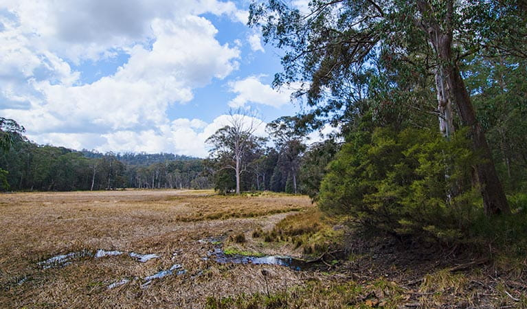 Mummel Gulf National Park, New Country Swamp. Photo: John Spencer/NSW Government