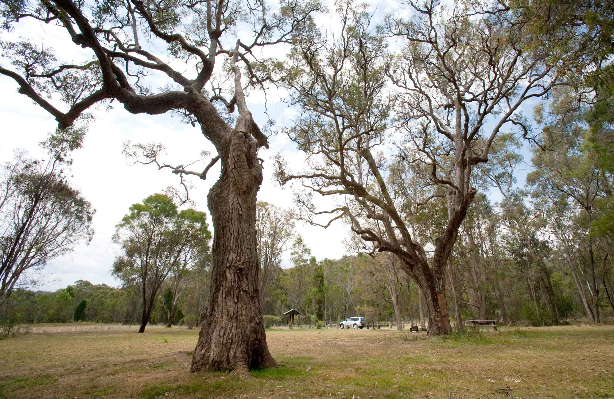 Moolarben picnic area, Munghorn Nature Reserve. Photo: Nick Cubbin/NSW Government