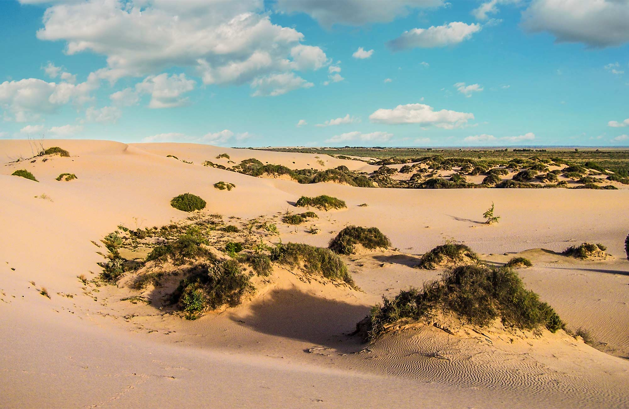 Sand dunes in Mungo National Park. Photo:OEH