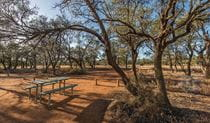 A picnic table surrounded by trees at Belah campground in Mungo National Park. Photo: John Spencer/DPIE