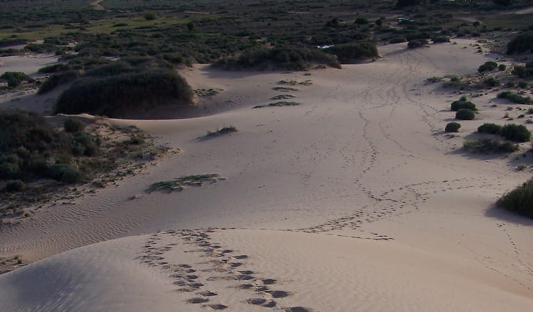 Footprints in the sand in Mungo National Park. Photo: OEH