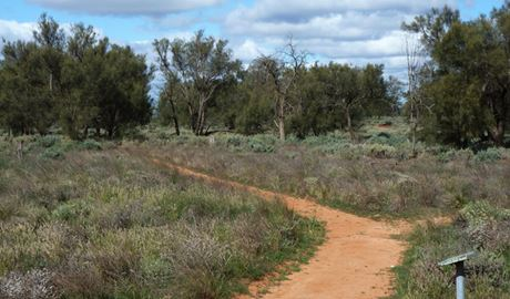 Grasslands nature trail in Mungo National Park. Photo: Lars Kogge