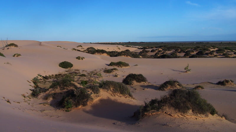 Sand dunes as far as the eye can see, Mungo National Park. Photo: OEH