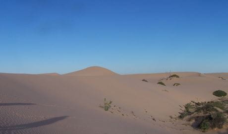 Sand dunes at Vigars Well picnic area. Photo: Dinitee Haskard OEH