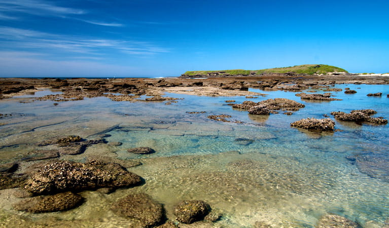 Moonee Beach walking track rock pools, Munmorah State Conservation Area. Photo: John Spencer