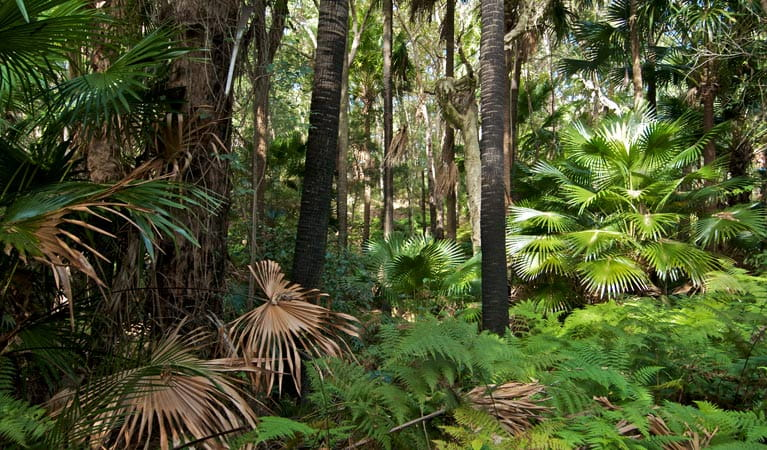 Palms circuit, Munmorah State Conservation Area. Photo: John Spencer