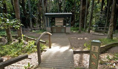 Palms picnic area in Munmorah State Conservation Area. Photo: John Spencer