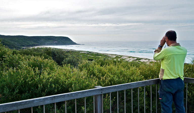 Tea Tree picnic area and lookout   NSW National Parks