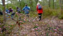 Bushwalkers and wildflowers along Point Loop walk. Photo: Elinor Sheargold/OEH