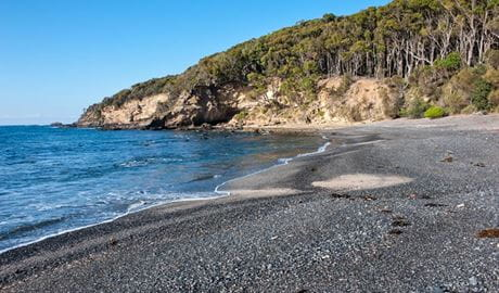 Dark Beach walking track, Murramarang National Park. Photo: Michael van Ewijk