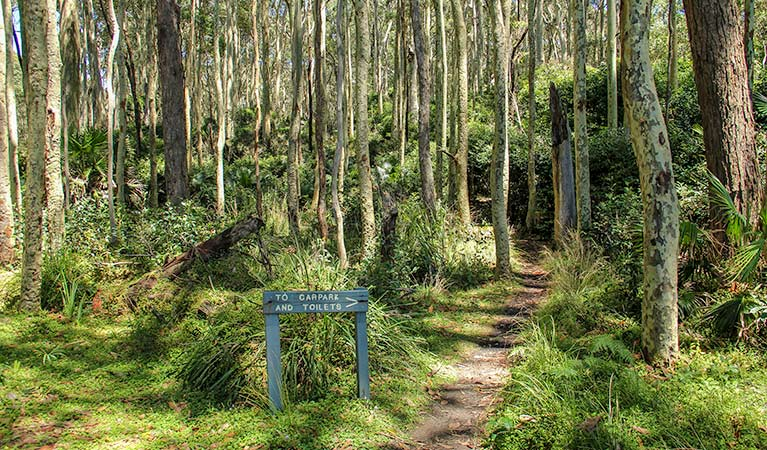 Depot Beach Rainforest walk, Murramarang National Park. Photo: Michael Jarman