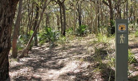 Honeysuckle Beach walk, Murramarang National Park. Photo: John Yurasek