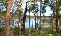 View of Durras Lake along Lake walking track, Murramarang National Park. Photo: Michael Jarman/OEH.