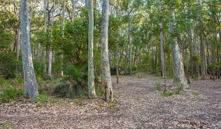 Oaky Beach walking track, Murramarang National Park. Photo: Michael van Ewijk