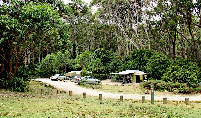 Progressive Near Me >> Pebbly Beach campground - Murramarang National Park | NSW ...