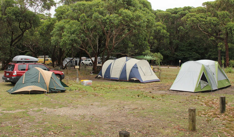 Tents at Pretty Beach campground, Murramarang National Park. Photo: John Yurasek