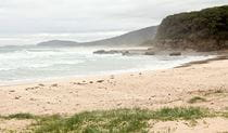 Pretty Beach to Snake Bay walking track, Murramarang National Park. Photo: John Yurasek/OEH