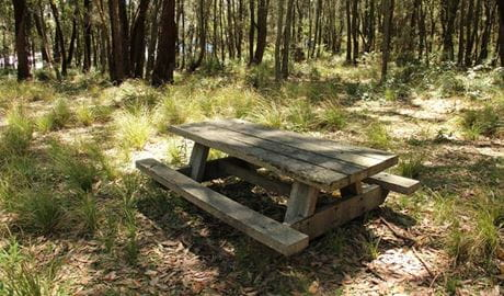 Wasp Head Picnic Area, Murramurang National Park. Photo: John Yurasek/NSW Government