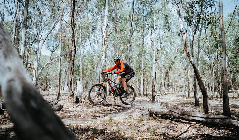 A bike rider cycles over a tree brand along Deniliquin mountain bike trails, Murray Valley Regional Park. Photo: Ain Raadik/Edward River Council