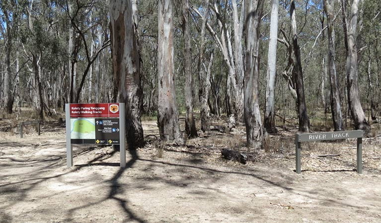 Signage at the start of Kolety walking tracks, Murray Valley Regional Park. Photo: Amanda Hipwell © DPIE