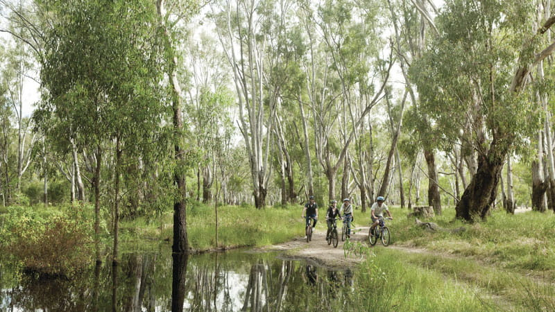 Cyclists, Murray Valley National Park. Photo: David Finnegan