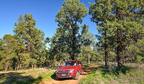 Forest drive, Murrumbidgee Valley National Park. Photo: Gavin Hansford