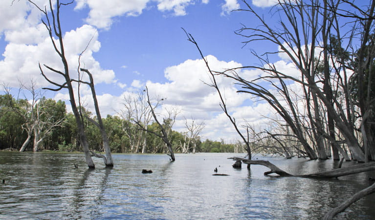 Wooloondool, Murrumbidgee Valley National Park. Photo: OEH