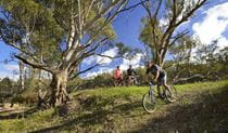 A group of 3 cyclists riding along the Murrumbidgee River's banks. Photo: Gavin Hansford/OEH.
