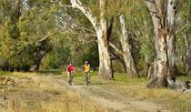 Turkey Flat trail, Murrumbidgee Valley National Park. Photo: Gavin Hansford