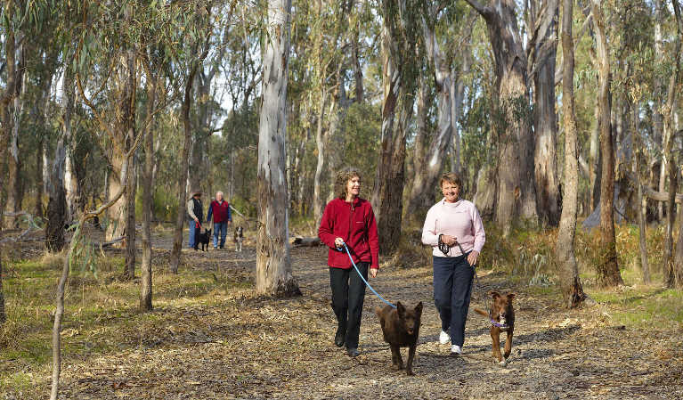 People walking their dogs along a forest trail in Murrumbidgee River Regional Park. Photo: Gavin Hansford/OEH.