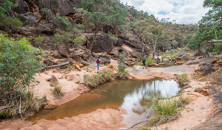 People walking along rockholes on Homestead Gorge walking track in Mutawintji National Park. Photo: John Spencer/OEH
