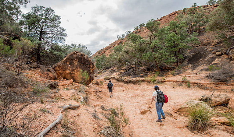 2 walkers walking on the Homestead Gorge walking track in Mutawintji National Park. Photo: John Spencer/OEH