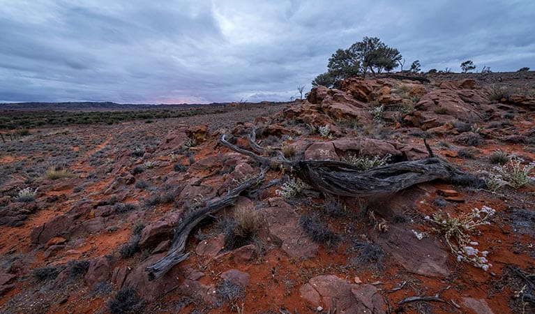 Mutawintji National Park rocky landscape at sunset. Photo: John Spencer/OEH