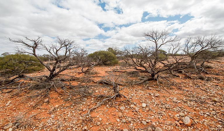 Bynguano Range walk, Mutawintji National Park. Photo: John Spencer