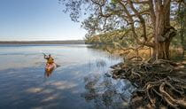 Visitor paddling across Boolambayte Lake, Bungarie Bay campground. Photo: John Spencer/OEH