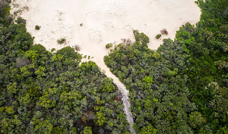 An aerial view of Dark Point walking track where it meets the beach in Myall Lakes National Park. Photo: John Spencer © DPIE