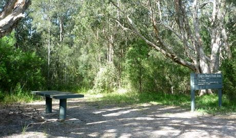 Engels Reach Picnic Area, Myall Lakes National Park. Photo: Katrina Gray
