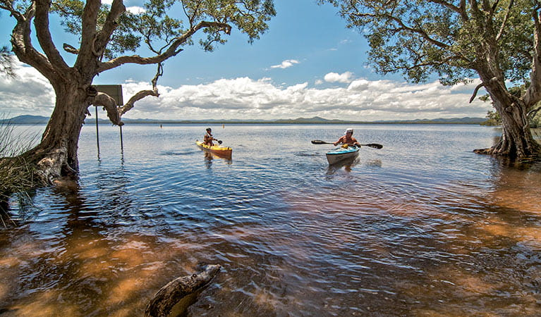 Kayaks on Myall Lake at Mungo Brush campground, Myall Lakes National Park. Photo: John Spencer/NSW Government