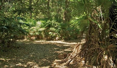 Mungo Brush Rainforest walk. Photo: John Spencer
