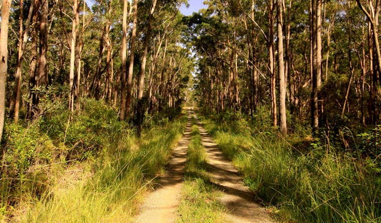 Old Mining road, Myall Lakes National Park. Photo: Shane Chalker