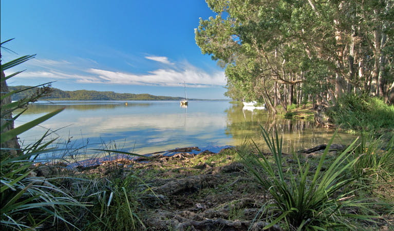 Black Oaks picnic area, Myall Lakes National Park. Photo: John Spencer