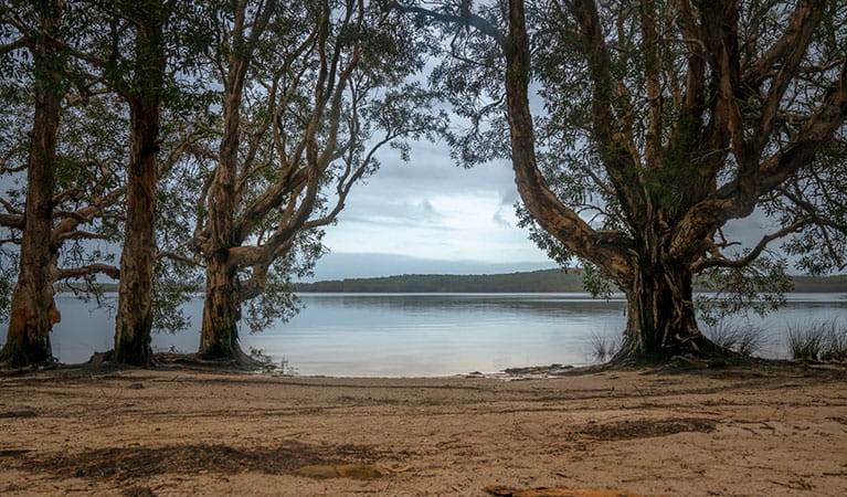 Two Mile Lake foreshore with large trees, and distant shore in the background. Photo: John Spencer © DPIE
