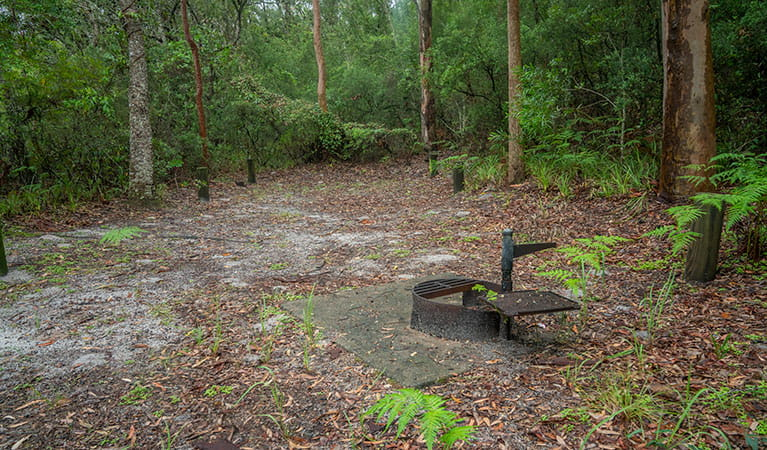 View of sandy camping area with wood barbecue, surrounded by trees and lush green undergrowth. Photo: John Spencer © DPIE