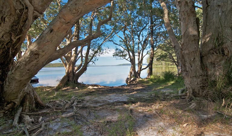 Neranie campground clearing, Myall Lakes National Park. Photo: John Spencer/DPIE