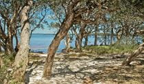 Northern Broadwater picnic area, Myall Lakes National Park. Photo: John Spencer