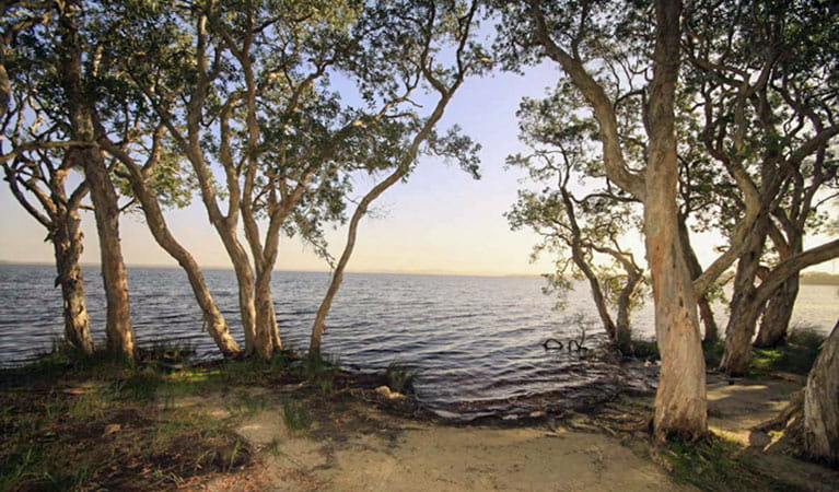 Northern Broadwater picnic area, Myall Lakes National Park. Photo: Shane Chalker